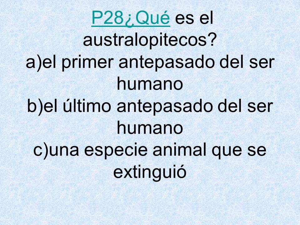 P28¿Qué es el australopitecos.