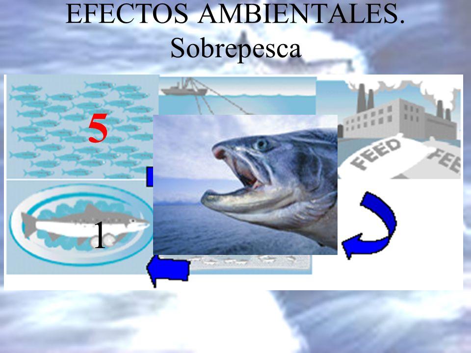 EFECTOS AMBIENTALES. Sobrepesca Para obtener un kg de salmón necesitamos entre 5-6 kg de otros pescados (VSF, Ecoceanos) El salmón se alimenta con pie