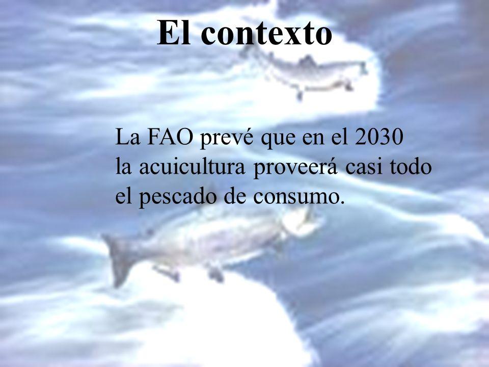 El contexto La FAO prevé que en el 2030 la acuicultura proveerá casi todo el pescado de consumo.