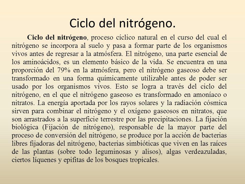 Ciclo del nitrógeno. Ciclo del nitrógeno, proceso cíclico natural en el curso del cual el nitrógeno se incorpora al suelo y pasa a formar parte de los