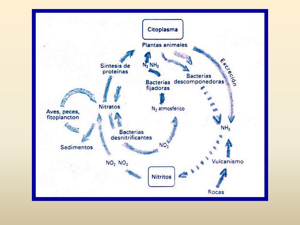 El nitrógeno que termina llegando a las lagunas, los lagos y las bahías oceánicas suele causar eutrofización, es decir, la abundancia en las aguas de un nutriente cuya concentración previa era escasa.
