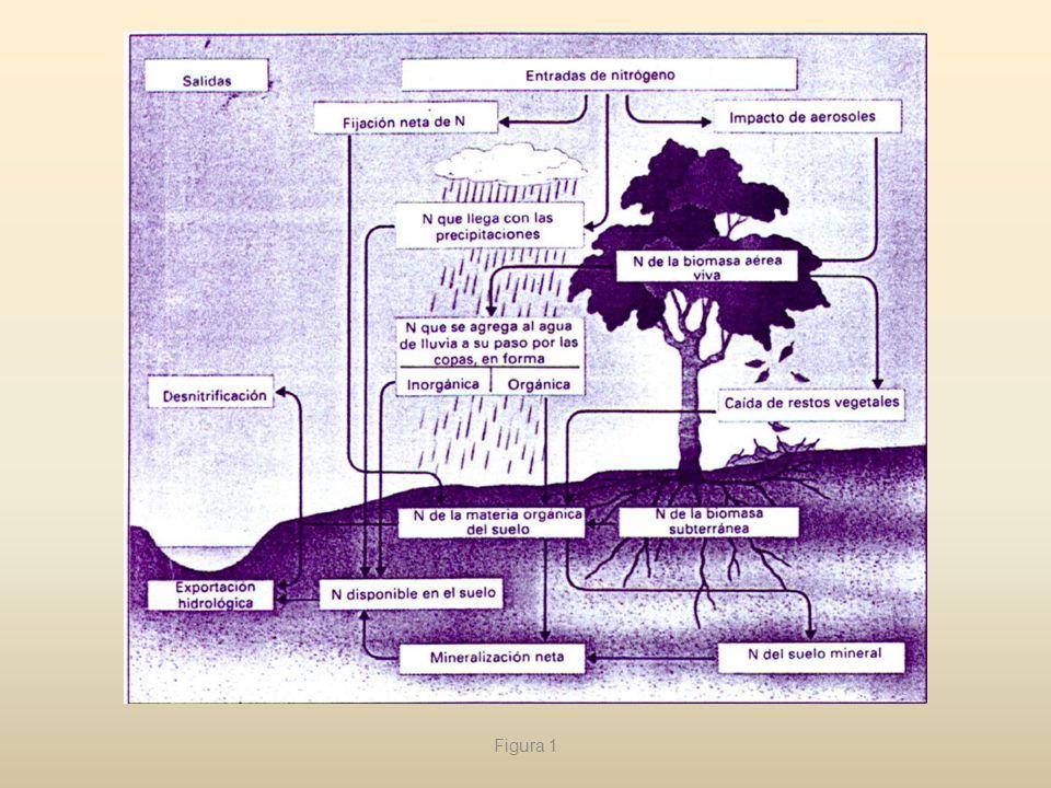 El nitrógeno tiene una gran importancia ecológica, tanto desde el punto lo de vista teórico como aplicado, puesto que muchas veces es el principal factor limitante de la producción primaria.