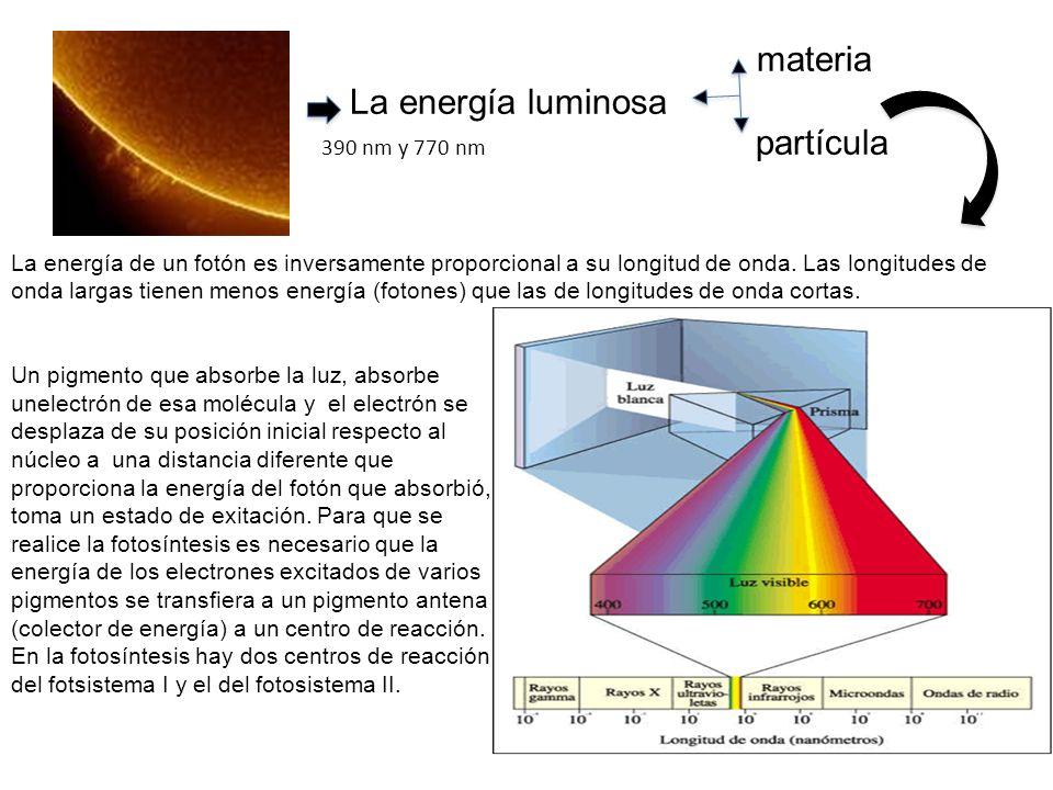 Pigmentos Los pigmentos son sustancias que absorben luz, transmitiendo o reflejando las longitudes de onda que no absorben.
