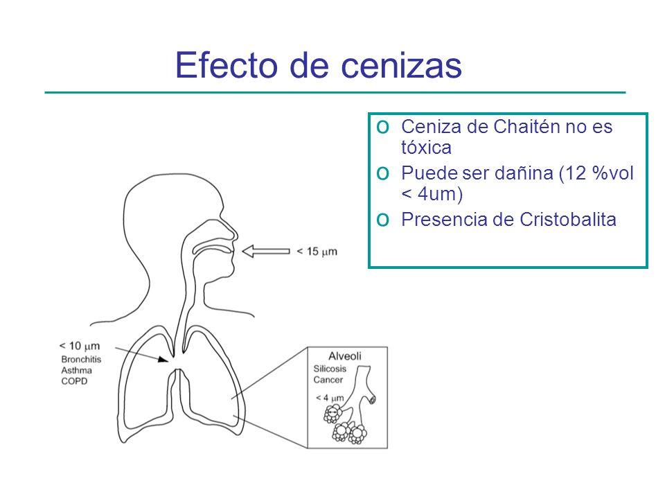 Efecto de cenizas o Ceniza de Chaitén no es tóxica o Puede ser dañina (12 %vol < 4um) o Presencia de Cristobalita