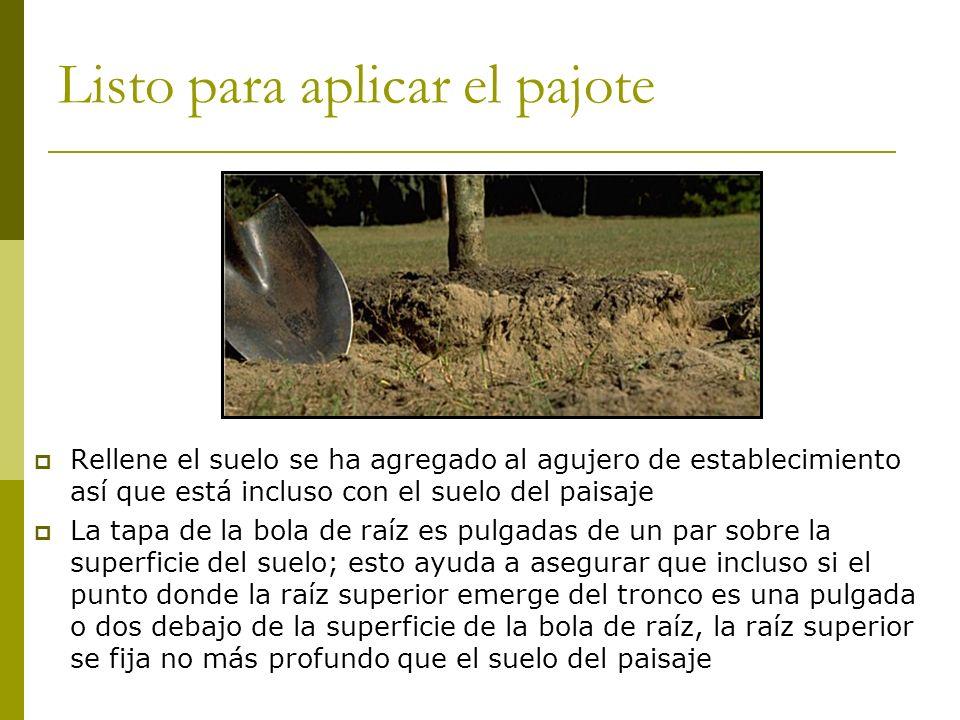Listo para aplicar el pajote Rellene el suelo se ha agregado al agujero de establecimiento así que está incluso con el suelo del paisaje La tapa de la