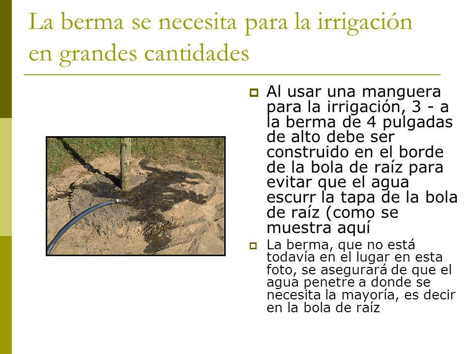La berma se necesita para la irrigación en grandes cantidades Al usar una manguera para la irrigación, 3 - a la berma de 4 pulgadas de alto debe ser c