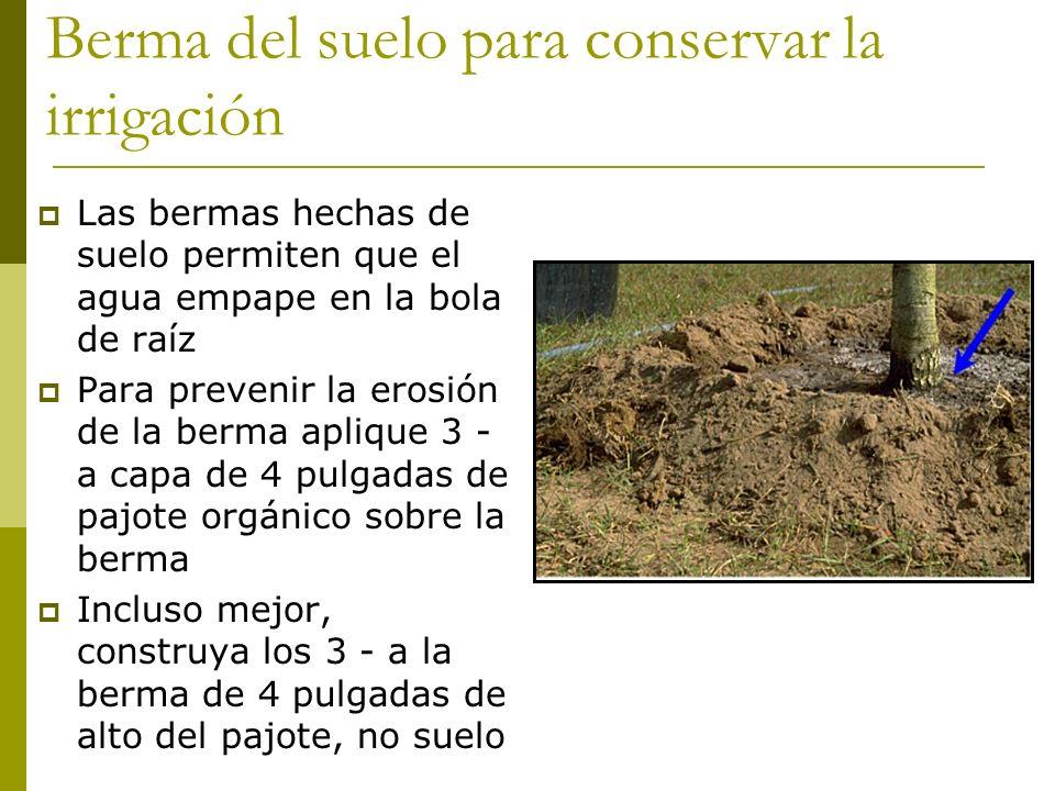Berma del suelo para conservar la irrigación Las bermas hechas de suelo permiten que el agua empape en la bola de raíz Para prevenir la erosión de la