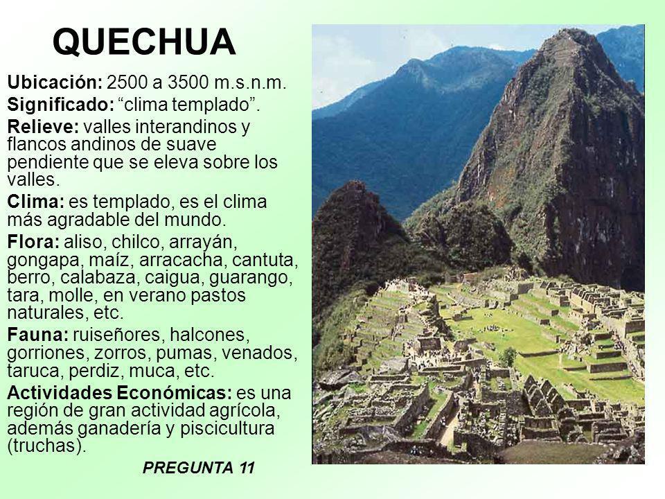 QUECHUA Ubicación: 2500 a 3500 m.s.n.m. Significado: clima templado. Relieve: valles interandinos y flancos andinos de suave pendiente que se eleva so