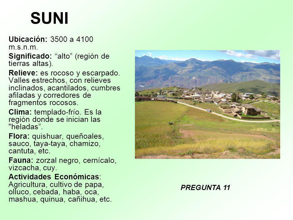 SUNI Ubicación: 3500 a 4100 m.s.n.m. Significado: alto (región de tierras altas). Relieve: es rocoso y escarpado. Valles estrechos, con relieves incli