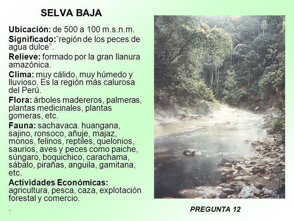 SELVA BAJA Ubicación: de 500 a 100 m.s.n.m. Significado:región de los peces de agua dulce. Relieve: formado por la gran llanura amazónica. Clima: muy