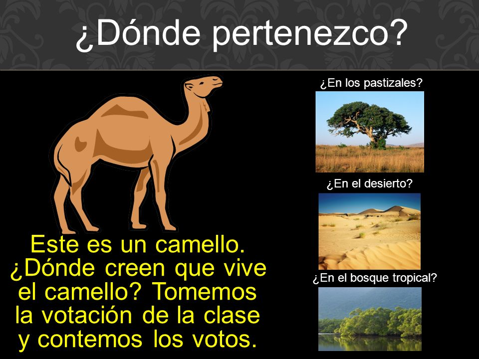 Este es un camello.¿Dónde creen que vive el camello.