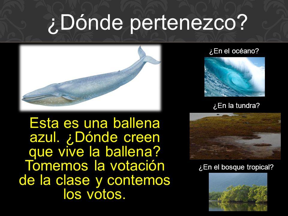 Esta es una ballena azul.¿Dónde creen que vive la ballena.