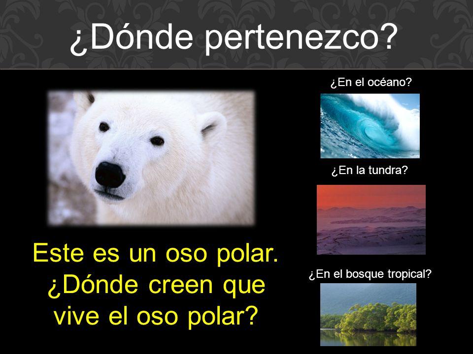 Este es un oso polar.¿Dónde creen que vive el oso polar.
