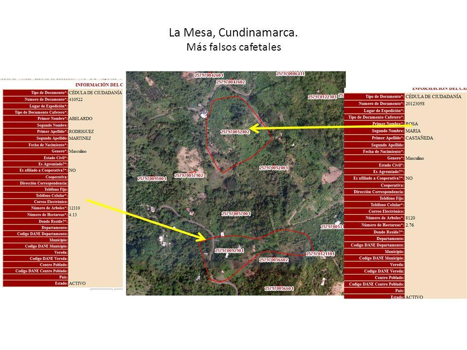 La Mesa, Cundinamarca. Más falsos cafetales