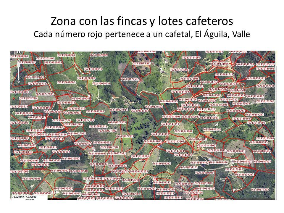 Zona con las fincas y lotes cafeteros Cada número rojo pertenece a un cafetal, El Águila, Valle