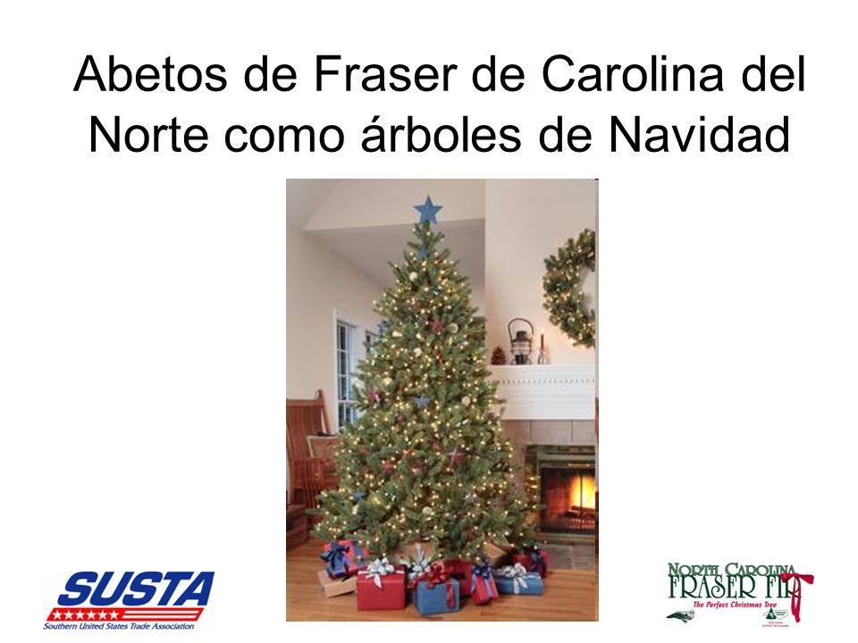 Abetos de Fraser de Carolina del Norte como árboles de Navidad