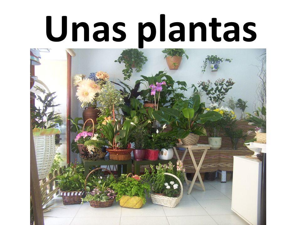 Unas plantas