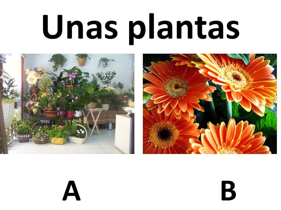 AB Unas plantas