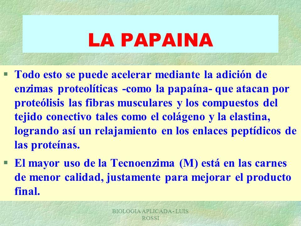 BIOLOGIA APLICADA - LUIS ROSSI LA PAPAINA §Todo esto se puede acelerar mediante la adición de enzimas proteolíticas -como la papaína- que atacan por p