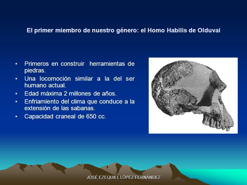 El primer miembro de nuestro género: el Homo Habilis de Olduvai Primeros en construir herramientas de piedras. Una locomoción similar a la del ser hum