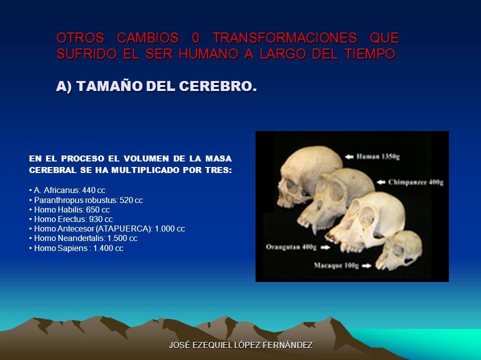OTROS CAMBIOS 0 TRANSFORMACIONES QUE SUFRIDO EL SER HUMANO A LARGO DEL TIEMPO. A) TAMAÑO DEL CEREBRO. EN EL PROCESO EL VOLUMEN DE LA MASA CEREBRAL SE