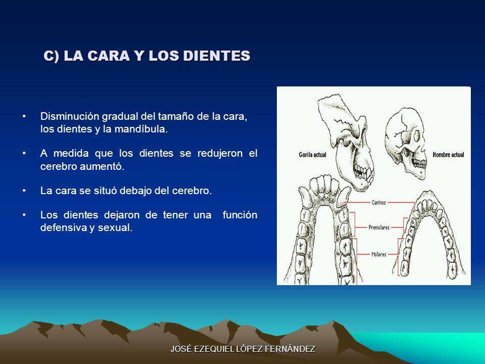 C) LA CARA Y LOS DIENTES Disminución gradual del tamaño de la cara, los dientes y la mandíbula. A medida que los dientes se redujeron el cerebro aumen