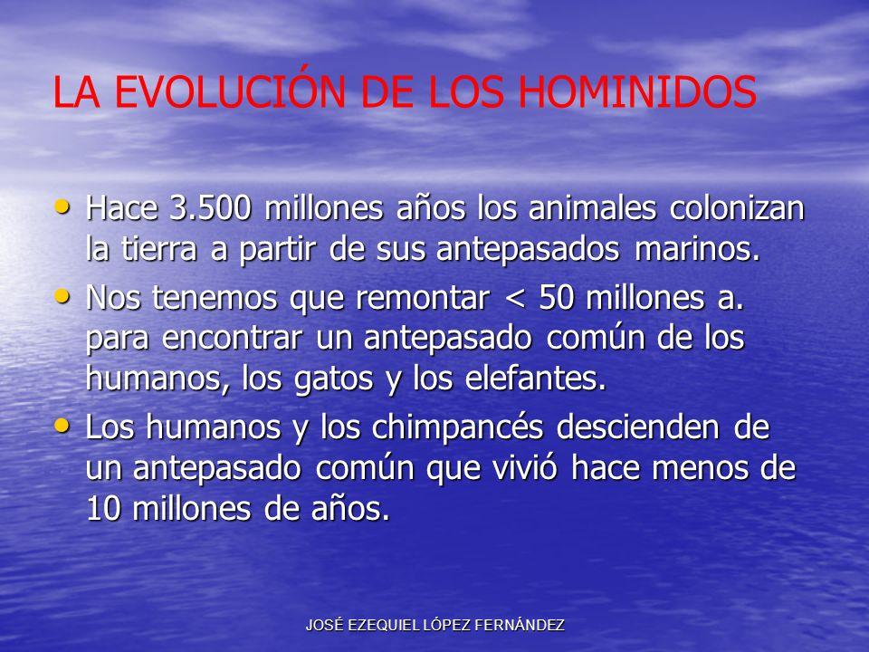 LA EVOLUCIÓN DE LOS HOMINIDOS Hace 3.500 millones años los animales colonizan la tierra a partir de sus antepasados marinos. Hace 3.500 millones años