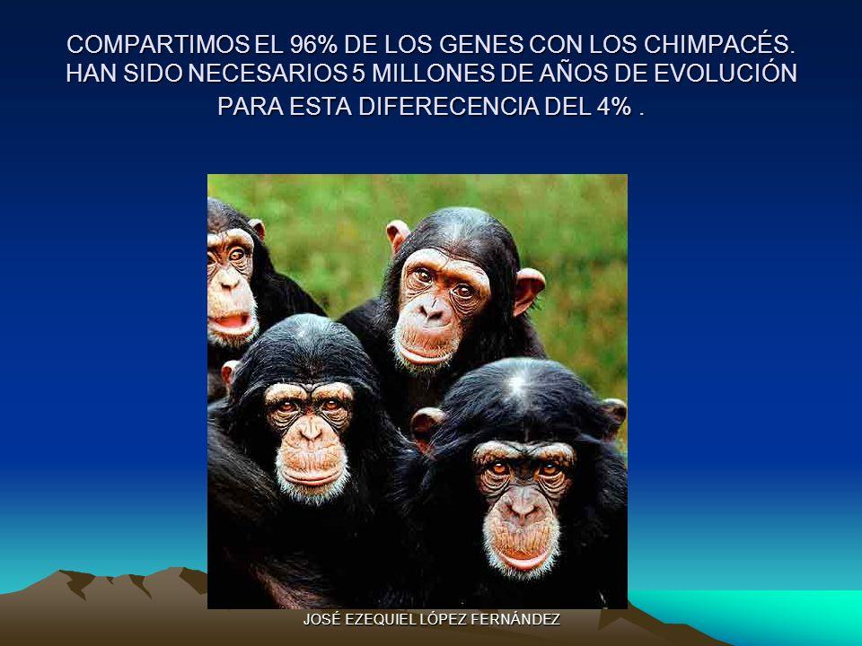 COMPARTIMOS EL 96% DE LOS GENES CON LOS CHIMPACÉS. HAN SIDO NECESARIOS 5 MILLONES DE AÑOS DE EVOLUCIÓN PARA ESTA DIFERECENCIA DEL 4%. JOSÉ EZEQUIEL LÓ