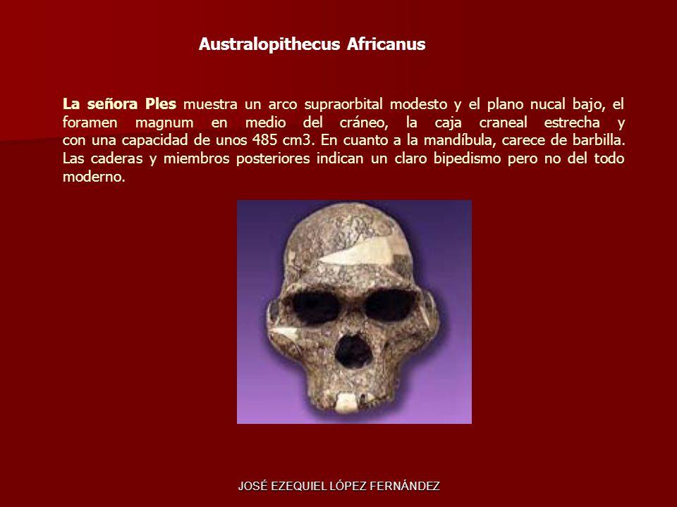 La señora Ples muestra un arco supraorbital modesto y el plano nucal bajo, el foramen magnum en medio del cráneo, la caja craneal estrecha y con una c