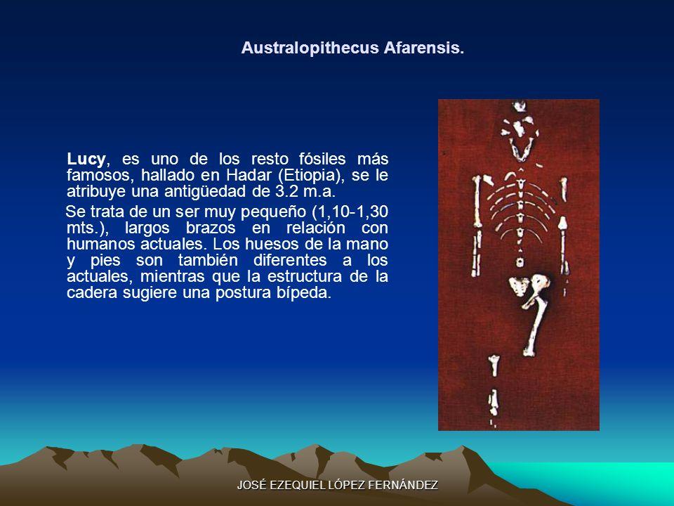 Australopithecus Afarensis. Lucy, es uno de los resto fósiles más famosos, hallado en Hadar (Etiopia), se le atribuye una antigüedad de 3.2 m.a. Se tr