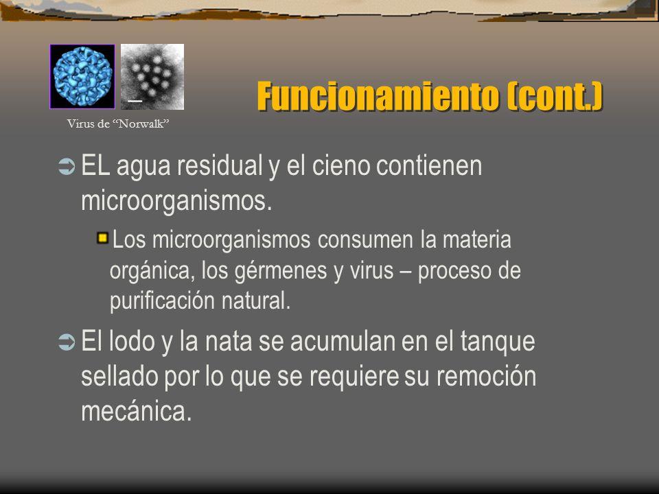 Funcionamiento (cont.) EL agua residual y el cieno contienen microorganismos.