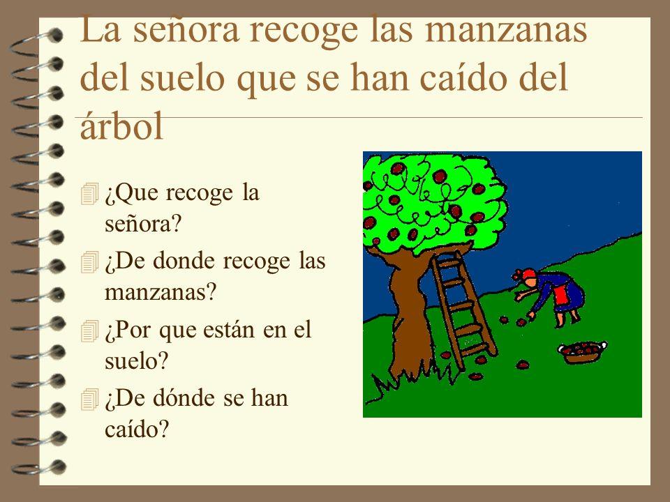 La señora recoge las manzanas del suelo que se han caído del árbol 4 ¿Que recoge la señora? 4 ¿De donde recoge las manzanas? 4 ¿Por que están en el su