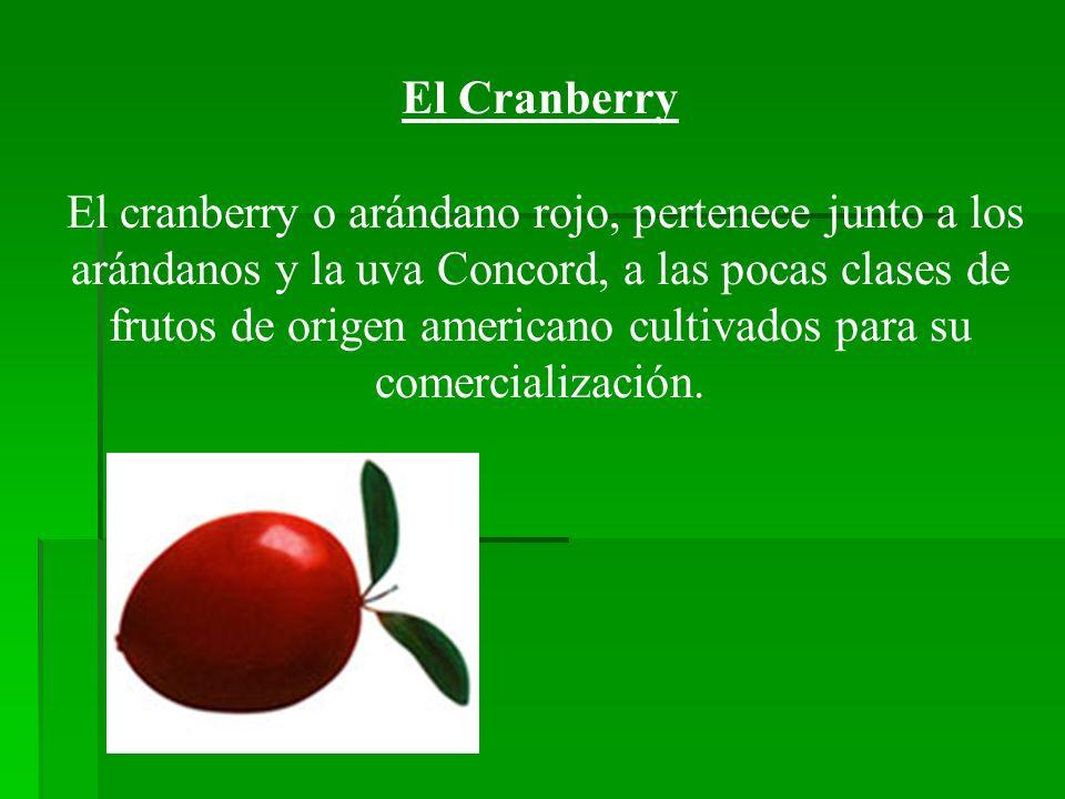 El Cranberry El cranberry o arándano rojo, pertenece junto a los arándanos y la uva Concord, a las pocas clases de frutos de origen americano cultivad