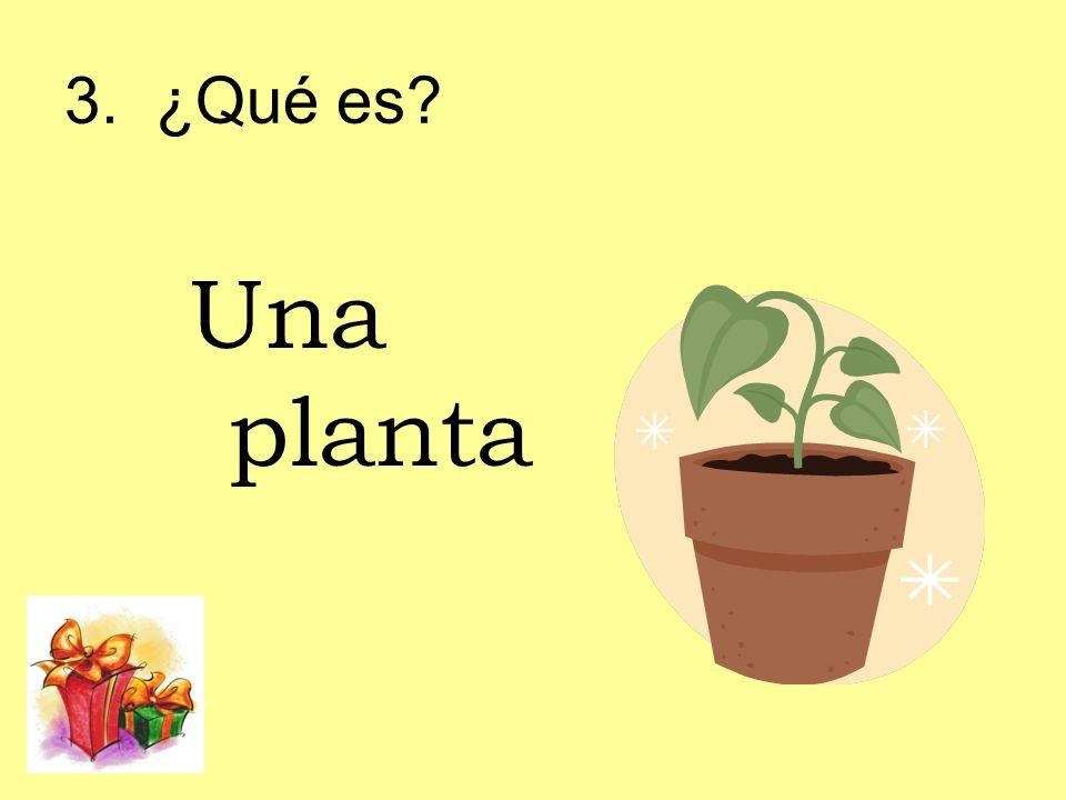 3. ¿Qué es? Una planta