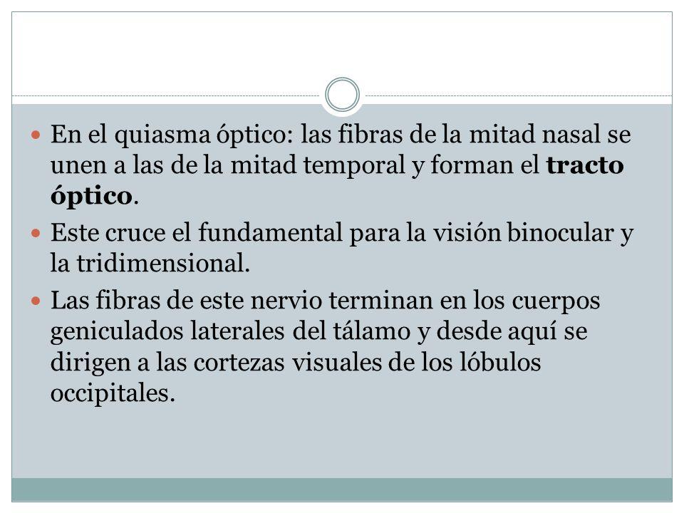En el quiasma óptico: las fibras de la mitad nasal se unen a las de la mitad temporal y forman el tracto óptico.