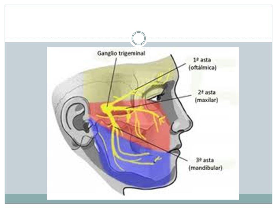 Nervio Abducens: VI Tiene función motora somática (eferente somática general y propioceptiva).