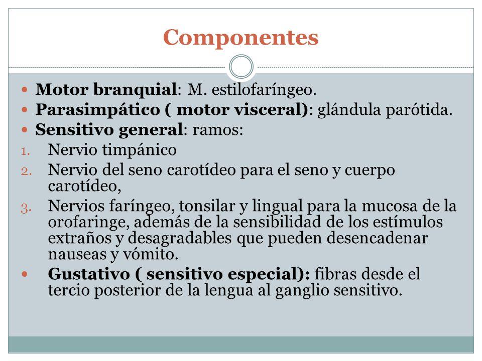 Componentes Motor branquial: M.estilofaríngeo. Parasimpático ( motor visceral): glándula parótida.
