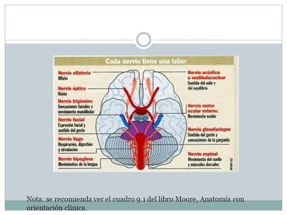 Nervio olfatorio: I Su función es sensitiva especial (aferente visceral especial).