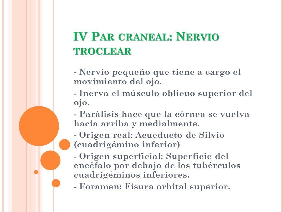 IV P AR CRANEAL : N ERVIO TROCLEAR - Nervio pequeño que tiene a cargo el movimiento del ojo. - Inerva el músculo oblicuo superior del ojo. - Parálisis
