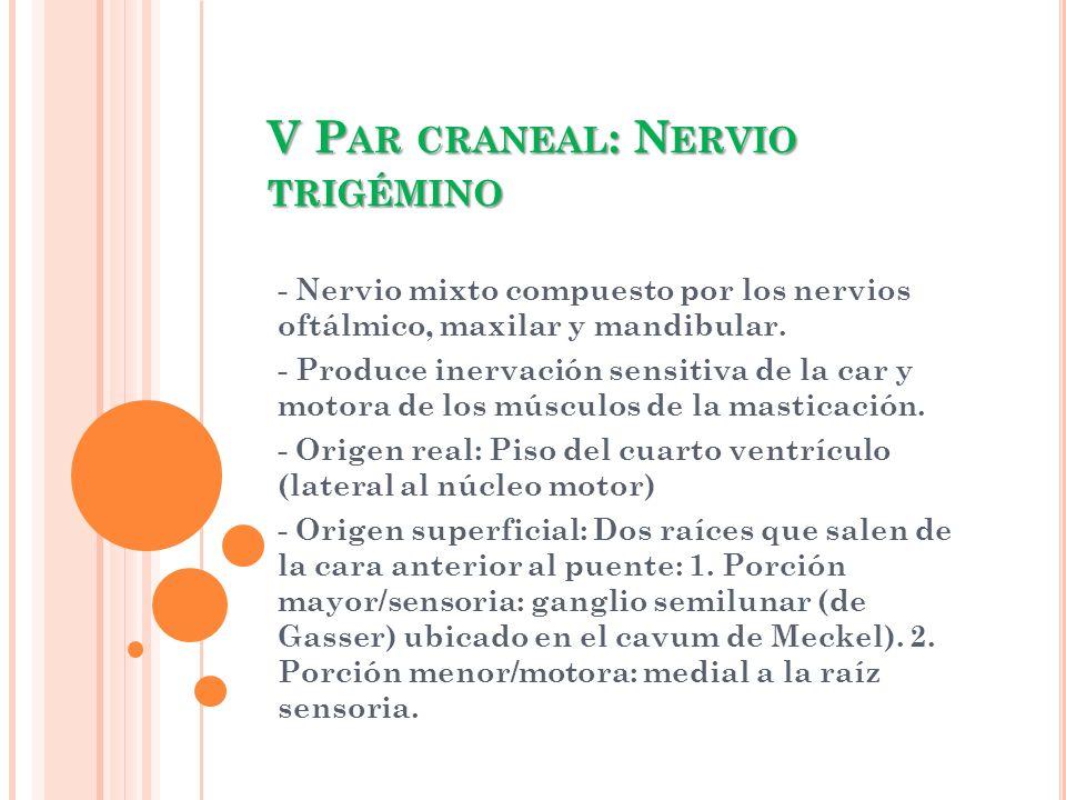 V P AR CRANEAL : N ERVIO TRIGÉMINO - Nervio mixto compuesto por los nervios oftálmico, maxilar y mandibular. - Produce inervación sensitiva de la car