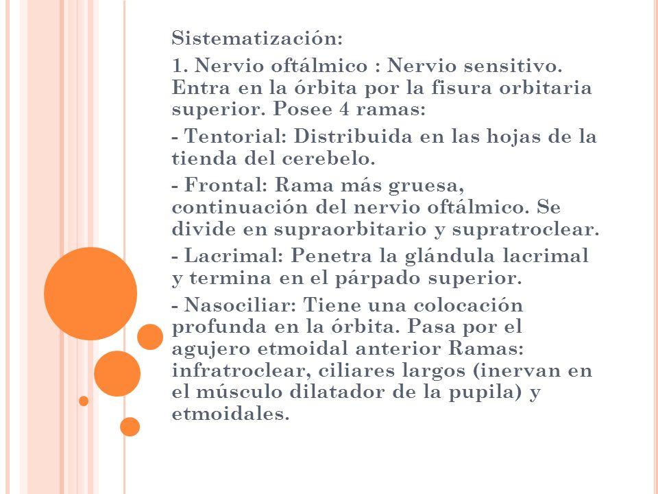 Sistematización: 1. Nervio oftálmico : Nervio sensitivo. Entra en la órbita por la fisura orbitaria superior. Posee 4 ramas: - Tentorial: Distribuida