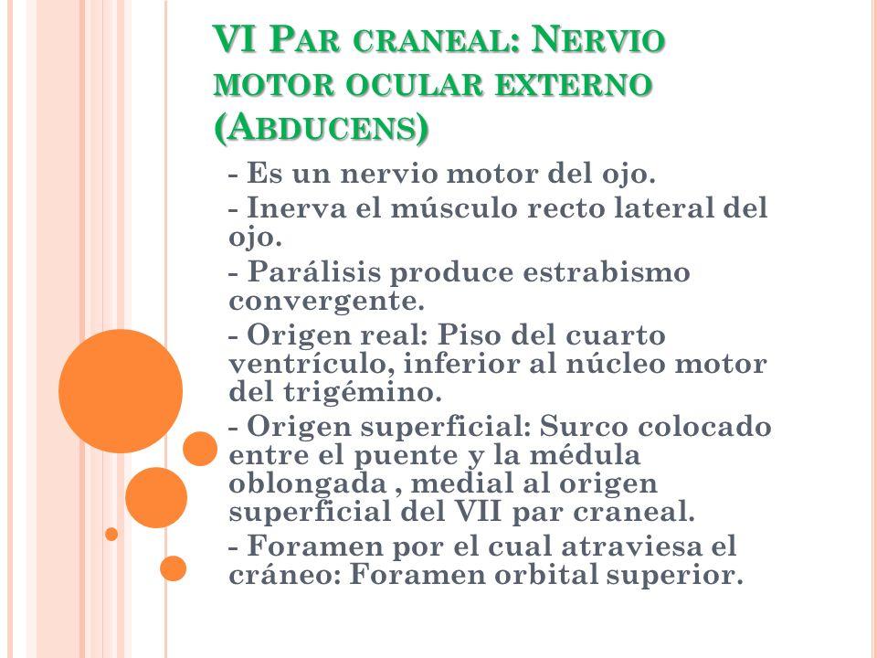 VI P AR CRANEAL : N ERVIO MOTOR OCULAR EXTERNO (A BDUCENS ) - Es un nervio motor del ojo. - Inerva el músculo recto lateral del ojo. - Parálisis produ