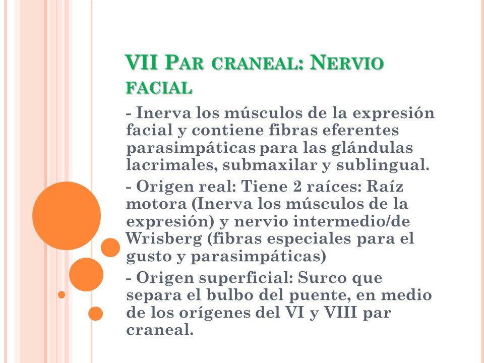 VII P AR CRANEAL : N ERVIO FACIAL - Inerva los músculos de la expresión facial y contiene fibras eferentes parasimpáticas para las glándulas lacrimale