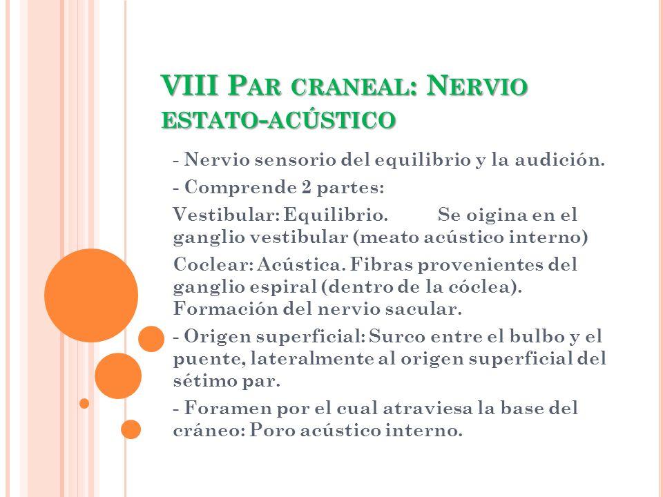 VIII P AR CRANEAL : N ERVIO ESTATO - ACÚSTICO - Nervio sensorio del equilibrio y la audición. - Comprende 2 partes: Vestibular: Equilibrio. Se oigina