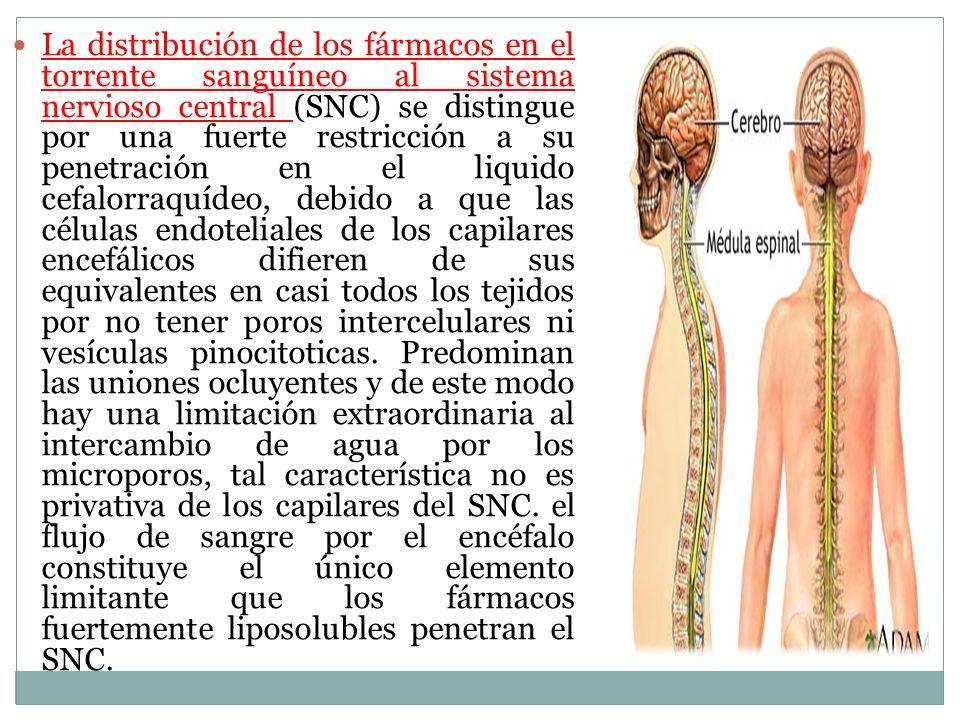 La distribución de los fármacos en el torrente sanguíneo al sistema nervioso central (SNC) se distingue por una fuerte restricción a su penetración en