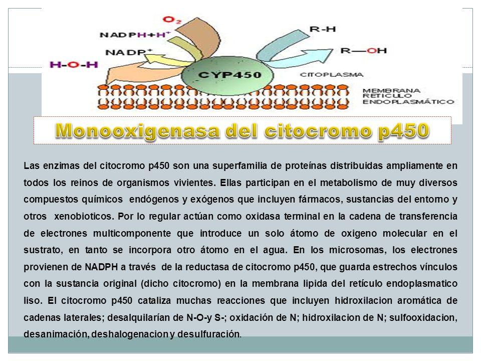 Las enzimas del citocromo p450 son una superfamilia de proteínas distribuidas ampliamente en todos los reinos de organismos vivientes. Ellas participa