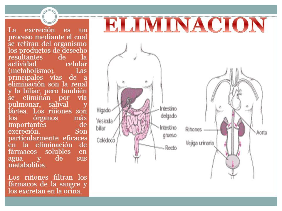 La excreción es un proceso mediante el cual se retiran del organismo los productos de desecho resultantes de la actividad celular (metabolismo ). Las