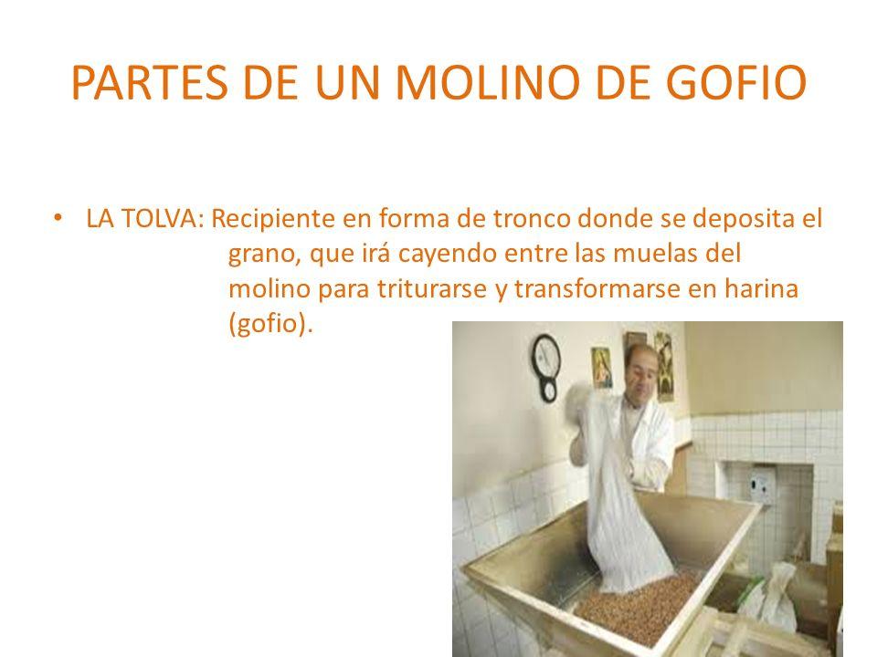 PARTES DE UN MOLINO DE GOFIO LA TOLVA: Recipiente en forma de tronco donde se deposita el grano, que irá cayendo entre las muelas del molino para trit