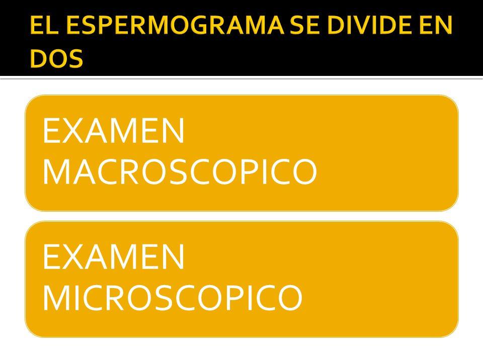 EXAMEN MACROSCOPICO EXAMEN MICROSCOPICO