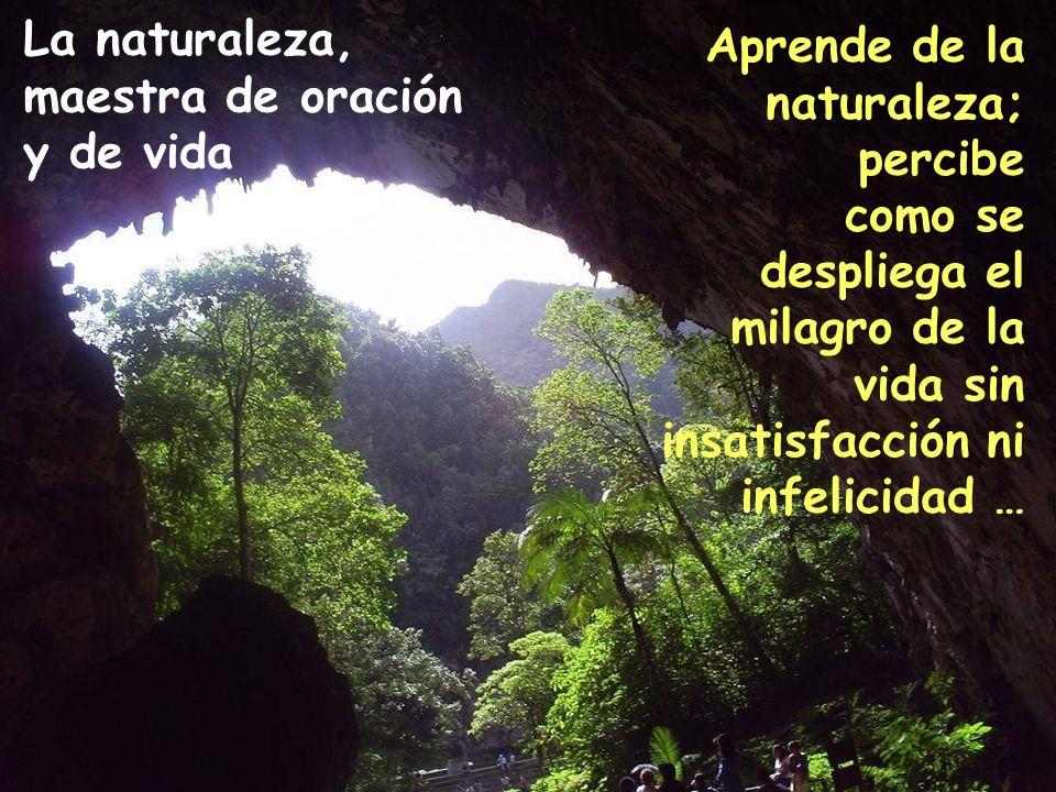 La naturaleza, maestra de oración y de vida Aprende de la naturaleza; percibe como se despliega el milagro de la vida sin insatisfacción ni infelicidad …